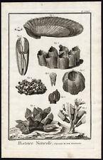 Antique Print-SEA SHELL-MULTIVALVE-Martinet-Diderot-1751