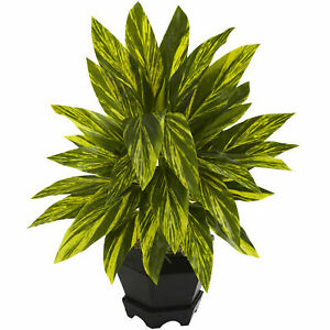 Ginger Plant W/Black Planter Green Leaves Realistic Nearly Natural Home Decor
