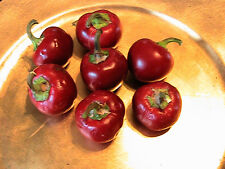 10 Cherry Bomb Pepper Seeds Spicy Seasoning