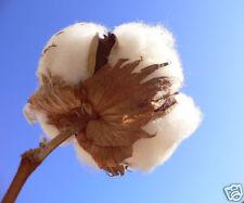 6 graines de COTON  ARBUSTIF(Gossypium arboreum)D59 COTTON SEEDS SAMEN SEMILLAS