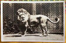 RPPC Real Photo Gilmore The Lion Gays Lion Farm El Monte CA C1920s