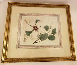 Antique Framed 1832 Curtis's Botanical Hand Colored Copper Plate Line Engraving