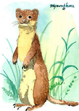Aceo Limited Edition -Long-tailed weasel, Animal art print, Gift for her