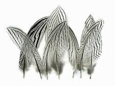 10 Natural Silver Pheasant Small Wing 4-5