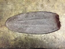 1 XX Large  UN-Tanned Beaver Tail/Salted/Air/dried /Home /Tanning/leather/Crafts
