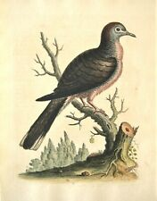 GEORGE EDWARDS ORIGINAL HAND COLORED BIRD ETCHING: PLATE 16 W/MEDAL: LONDON 1740