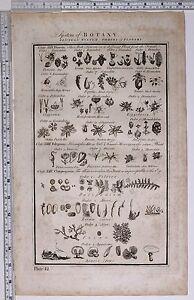 1788 ORIGINAL PRINT BOTANY LINNEAN SYSTEM FLOWERS FILICES POLYPODIUM AGARIC