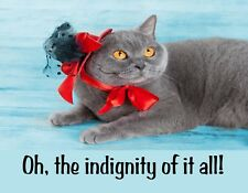 METAL FRIDGE MAGNET Gray Cat Red Hat Oh The Indignity Of It All Humor Cats