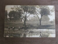 Early postcard-cattle drinking - West Chislehurst Pond-London Borough of Bromley