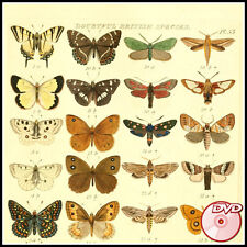 BUTTERFLIES - Old Books - South Africa - New Zealand - COLOR PLATES - 2 DVD's