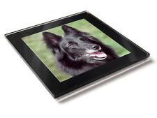 BELGIUM GERMAN SHEPHERD Dog Puppy Premium Glass Table Coaster with Gift Box