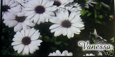 CHECKBOOK COVER PERSONALIZED WHITE FLOWERS
