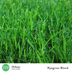 McKays Rye grass Grass Seed Blend 1kg - Lawn Seed Free Postage Ryegrass