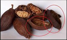 4 Cocoa empty dry Pods  ORGANIC Tropical Fruit Tree 100% fresh