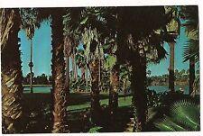 PALM TREES Surrounding Scenic Lakes in  TEXAS TX Postcard Unused, FREE SHIP!