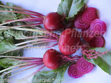 Rote beete chiogga rojo/blanco Anillado 30 Semillas