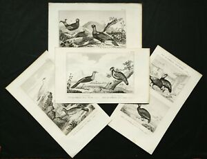 1837 Set of 4 Antique Prints of UPLAND BIRDS. GAME BIRDS. HUNTING. 184 years old