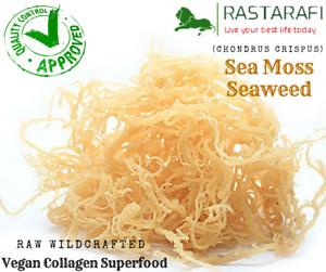 Rastarafi® Whole Leaf Irish Moss Sea Moss 1 lb | Raw WildCrafted Superfood-16 Oz