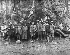 1903 President THEODORE 'TEDDY' ROOSEVELT & JOHN MUIR Glossy 8x10 Photo Print