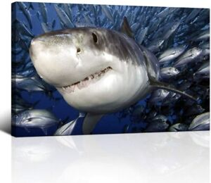 Wall Decor Shark Catching Fish Pictures Prints On Canvas Animal Picture