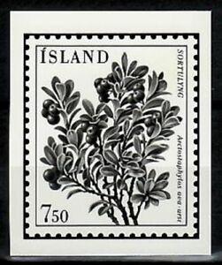 Photo Essay, Iceland Sc594 Flower, Arctostaphylos uva-ursi.