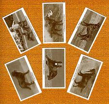 Flat Coated Retriever Named Set 6 Dog Photo Trade Cards
