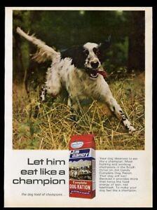 1968 English Setter nice color photo Jim Dandy dog food vintage print ad