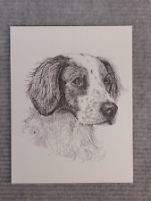 Brittany Spaniel Pen and Ink Stationary Cards, Note Cards, Greeting Cards.10pk.