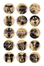 """DOG  ON NEWSPAPER 15 BOTTLE CAP IMAGES  1"""" CIRCLES *****FREE SHIPPING*****"""