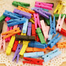 100 Pcs Mini Natural Wooden Clothe Photo Paper Peg Clothespin Craft Clips-25mm~