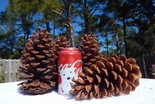 "10 LARGE ORGANIC GEORGIA PINE CONES CHRISTMAS HOME DECOR FIRE STARTERS 5-7"" TALL"