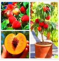 10 PCS Seeds Peach Tree Plants Fruit Bonsai Rare Free Shipping 2019 Easy To Grow