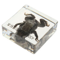 Resin Toad Specimen In Clear Lucite Real Animal Collectible Gift