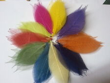 100 mix colour skeleton leaves for crafts weddings scapbooks free post !