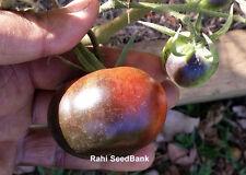 Wild Card Blues Tomato - A Beautiful Beefsteak like Small Blue Tomato - 10 Seeds