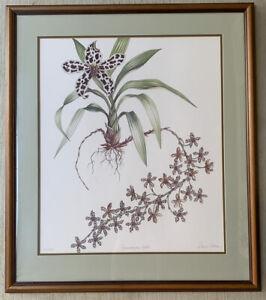 "Dianne Coleman ""Grammatophyllum Orchid"" Signed, Matted, Framed Litho Print"