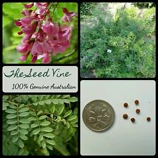 20+ TRUE INDIGO SEEDS (Indigofera tinctoria) Blue Dye Flower Pink Purple Shrub