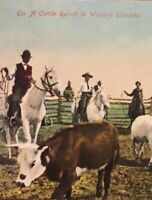 Postcard, On A Cattle Ranch In Western Canada Alberta Canada, Vintage P21
