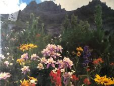 "Unopened Springbok Jigsaw Puzzle ""Wildflower Valley"" 500 pc Flowers PZL4419 USA"
