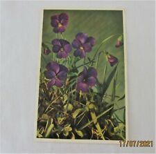 Vintage 1940s Alfred Mainzer  N.Y. Violets Botanical Postcard Printed in Belgium