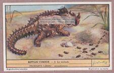 Thorny Devil Moloch Reptile Australia Nice 65+ Y/O Trade Ad Card
