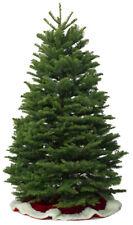 Live Christmas Tree - Real Nordmann Fir UK Grown Premium Fresh Xmas Tree 5ft 6ft