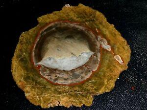 "Mushroom Jasper slab - 4 1/2""  x  4 1/8""--rough for cabbing or display"