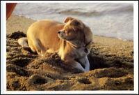 Motiv-AK Thema Tiere Tier Hunde Dogs Hund gräbt im Sand Tier Motivkarte