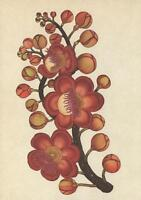 LARGE SIZE CANNONBALL TREE FLOWERS POSTCARD - Kew Royal Botanic Gardens