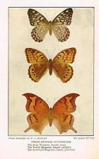 "Weed's ""Butterflies Worth Knowing"" - THREE EMPEROR SWALLOWTAILS -  Litho - 1922"