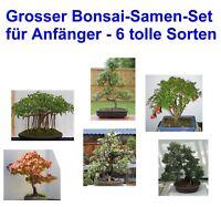 Sämereien Exoten 6 leicht zu ziehende Sorten i! großer Bonsai-Einsteiger-Set !i