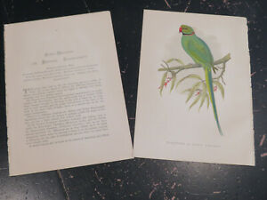 Ring Necked Parrakeet - Parrots in Captivity, by Greene.  London ca: 1884