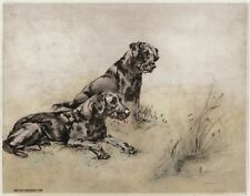 LABRADOR RETRIEVER BLACK DOG LIMITED EDITION PRINT ENGRAVING by Henry Wilkinson