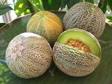 """Rocky Ford Green Flesh Melon *Heirloom*  (50 Seed's) """"FREE SHIPPING""""<Non-GMO>"""
